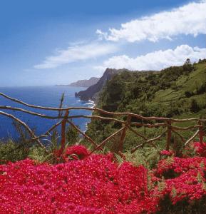 Die Blumenpracht von Maderia - Quelle OLIMAR Reisen - Südeuropa