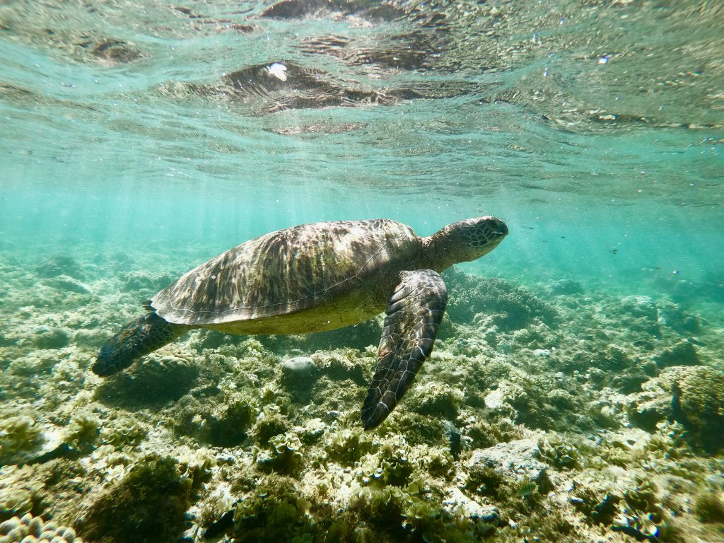 Nur mit Handgepäck reisen - Unterwasserbild von Schildkröte