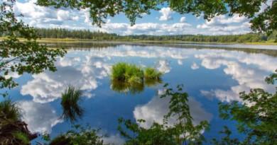 Wanderung von Bad Wurzach nach Kißlegg: Moor, Seen und weite Landschaften