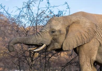 Safari im Pilanesberg Nationalpark in Südafrika
